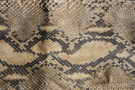 Textura da pele do couro de cobra