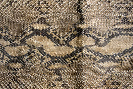 Texture of snake leather skin