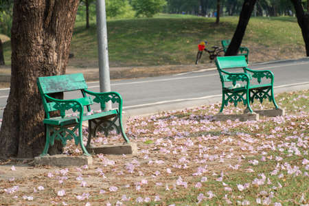 Full of pink Tabebuia flower on the ground at the park.