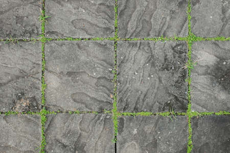 scraggly: Exposed concrete block floor with grass. Stock Photo