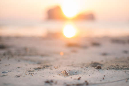 Ghost crab on the beach with sun rising scene in background. photo