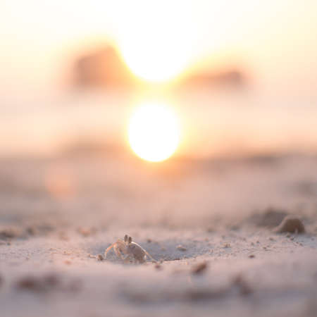 Ghost crab on the beach with sun rising scene in background.