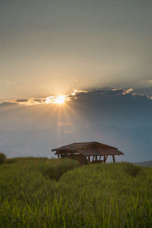 Beautiful sunset ray in rice terrace field at Banpabongpieng, Thailand. Stock Photo