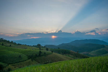 Beautiful sunset ray in rice terrace field at Banpabongpieng, Thailand. Banque d'images