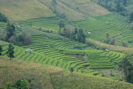 Rice terrace field in countryside at Banpabongpieng, Thailand. Banque d'images