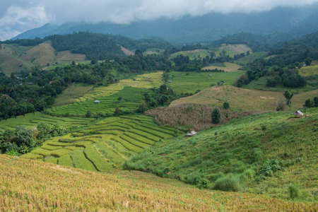 Rice terrace field in countryside at Banpabongpieng, Thailand. Stock Photo