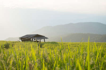 Homestay among rice terrace field in countryside at Banpabongpieng, Thailand.