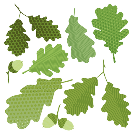 crocket: Isolated green leaf of oak without gradient, acorn