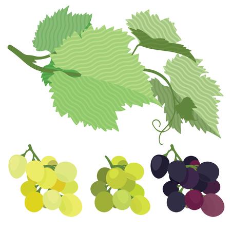 red grape: Grapes red, green, white, grape leaves, vines, flat illustration, set Illustration