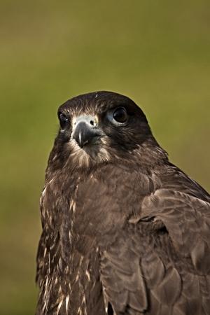 confined: head predators Stock Photo