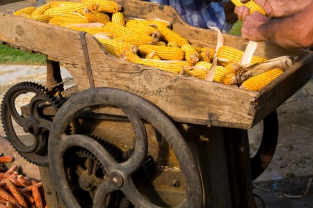 rack wheel: An old machine taking away the corn from the corncobs