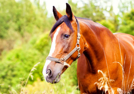 Portrait of a light brown horse in the grass photo