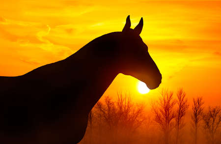 animal silhouette: Silhouette of a horse on a background of orange sky at sunset