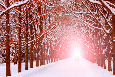 end of a long day: Two people are on the long avenue of trees along the winter
