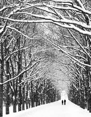 end of a long day: Two people are on the long avenue of trees along. Black and white.