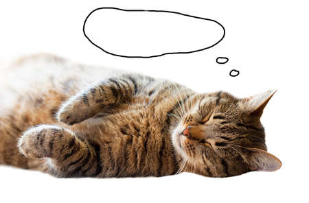 labeling: Cat sleeping on the floor while lying on his back. Painted a cloud labeling. Stock Photo