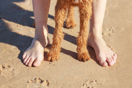 Paws red dog near the girls feet. Reklamní fotografie