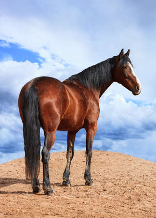 Portrait of horse on the background of cloudy sky