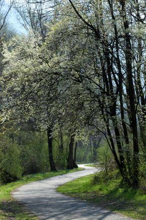 Valtellina path in spring