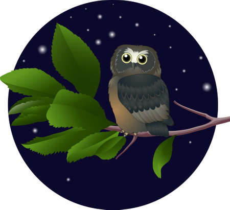 owl on a branch. vector illustration Vector