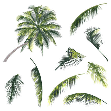 samui: vector illustration of a tree and palm tree branches
