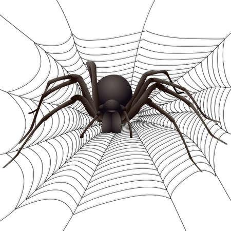 ウェブで大きなクモ。ベクトル イラスト