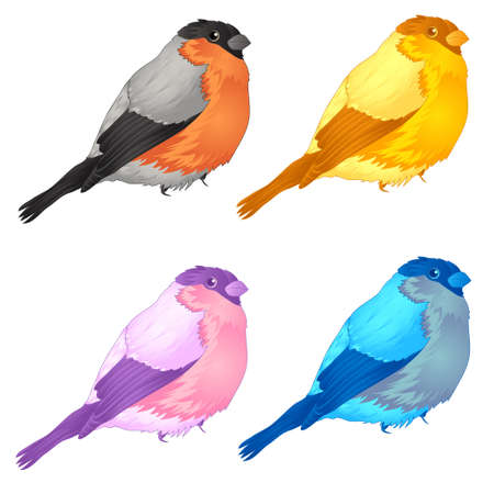 forest birds. bullfinch. vector illustration