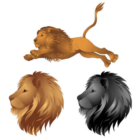 cruel: Lions in the jump. a lions head. vector illustration