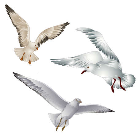 Vector illustration of birds gull on white background