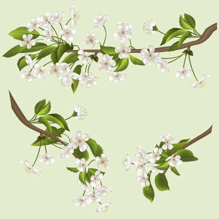 boom met witte bloemen. vector illustratie