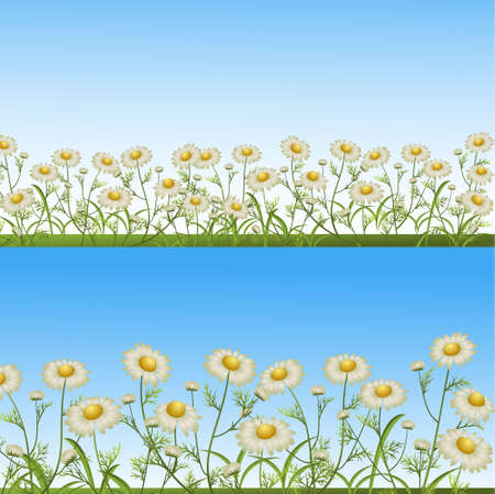 glade: camomiles on a glade. vector illustration