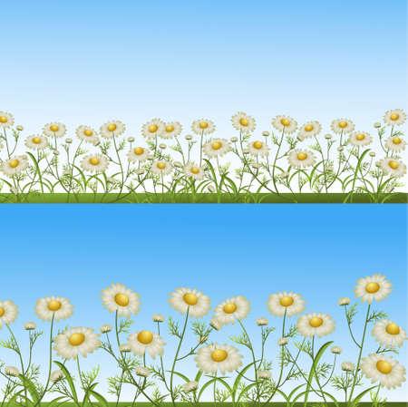 camomiles op een glade. vector illustratie