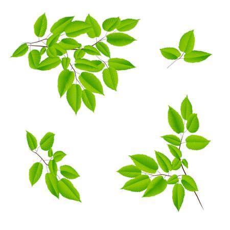 groene bladeren van een boom. vectorillustratie
