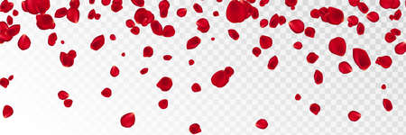 Background with red rose petals. Eps 10 vector. Falling red flower petals against pink background. Happy Valentines day card. Valentines day background