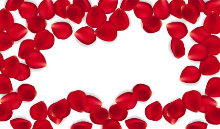 Red rose petals against white background. Eps 10 vector. Vector red rose petals background