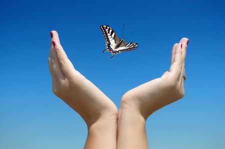 Beautuful butterfly flying to a clear blue sky.     photo