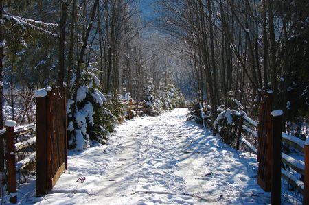 Mountain Road ist an einem kalten Tag der Winter mit Schnee bedeckt. Standard-Bild - 8347999
