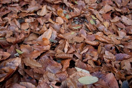 autum: Autum leafs covering the ground  Stock Photo