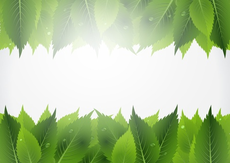 This image represents a green leaf background    Leaf Background Stock Vector - 16553072