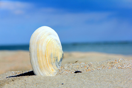This picture represents a shell o a sand beach, summertime.