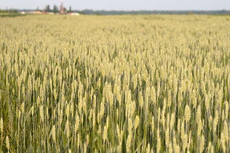 Grain farm Stock Photo - 5145528