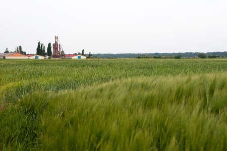 Grain farm Stock Photo - 5144650