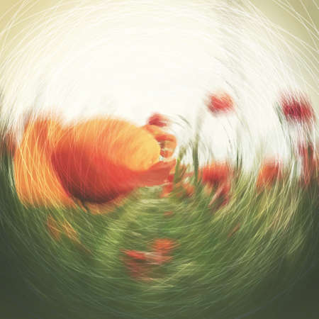 abstract template: Blurred Poppy Flower Field Background Template