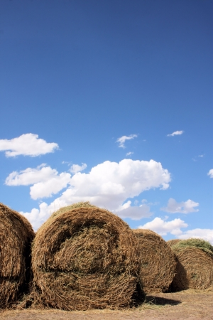 Rows of Rolled Hay photo