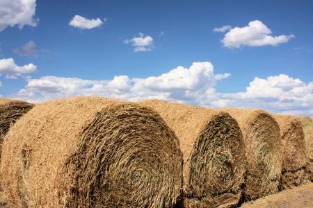 Large Rolls of Hay
