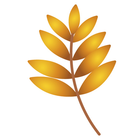 Autumn leaf. Autumn maple leaf isolated on a white background. Vector illustration flat eps10