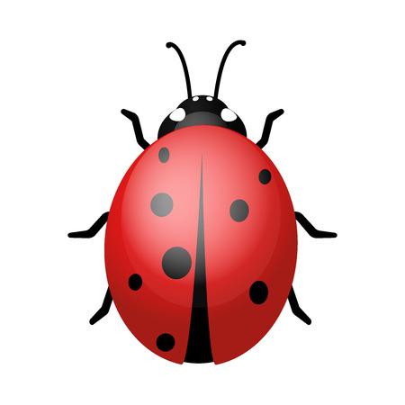 白い背景の上のてんとう虫。デザインのベクトルとイラスト デザイン eps10