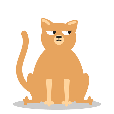 Angry grumpy cat flat vector. Nope kitty on white background Vector flat icon illustration