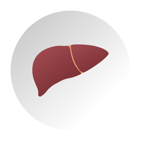 Human liver anatomy. Human internal organs symbol. Vector illustration in flat style isolated on white background. Human liver anatomy. Medical science vector illustration. Internal organ gallbladder, aorta and portal vein, hepatic duct. Education illustration