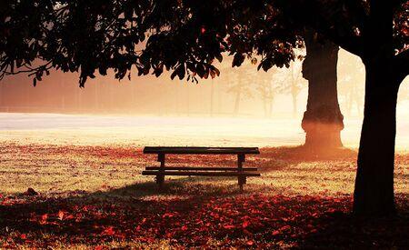 Park bench on misty dawn Stock Photo